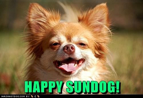 dogs smiling happy sundog chihuahua happy Sundog - 6855284736
