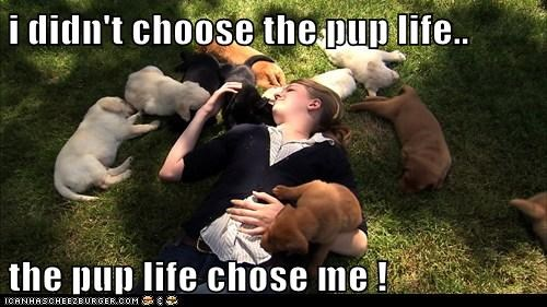i didn't choose the pup life.. the pup life chose me !