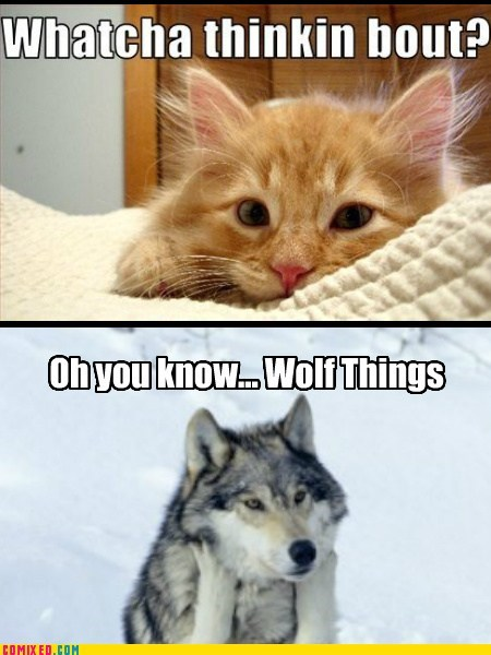 cat whatcha thinkin bout animals wolf - 6855742208