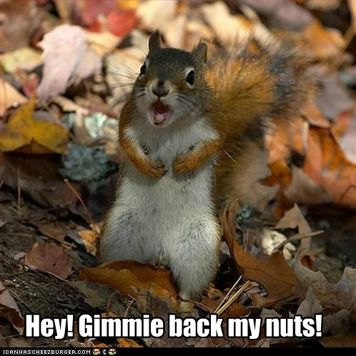Hey! Gimmie back my nuts!