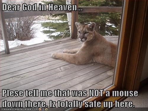 mountain lions,deck,safe,cougars,scared,mouse