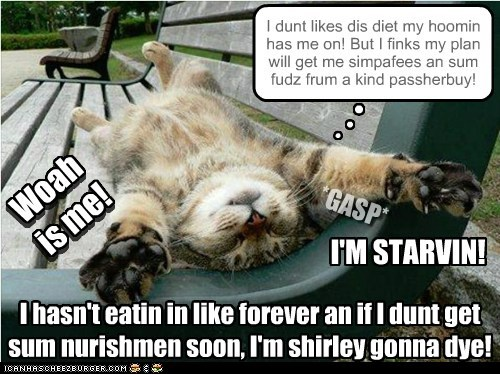 I hasn't eatin in like forever an if I dunt get sum nurishmen soon, I'm shirley gonna dye! I dunt likes dis diet my hoomin has me on! But I finks my plan will get me simpafees an sum fudz frum a kind passherbuy! n n n *GASP* I'M STARVIN! Woah is me! Woah is me!