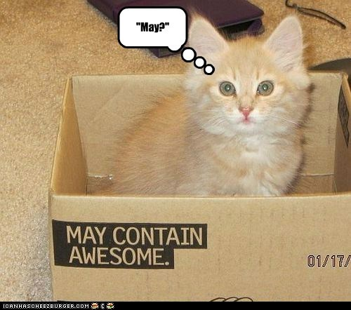 may box awesome captions label Cats - 6856588288