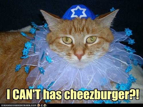 Cheezburger Image 6856790272