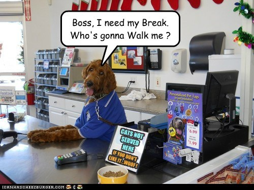boss,dogs,part time job,walks,corner store,break,what breed
