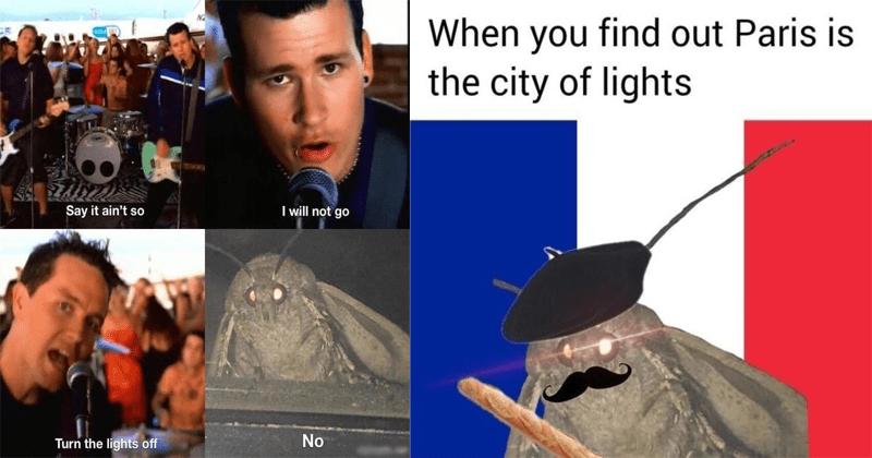 funny moth memes