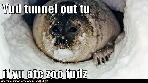 tunneling,escaping,seal,zoo,food
