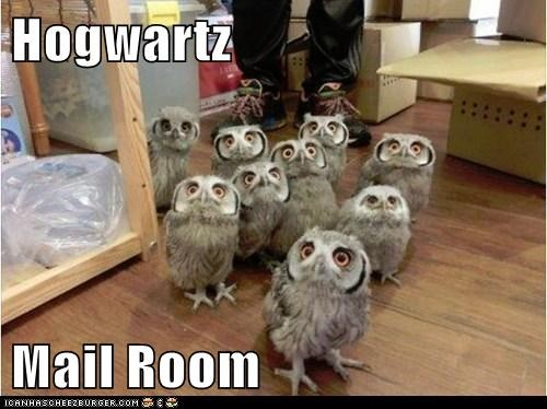 Harry Potter,Staring,owls,mail,Hogwarts