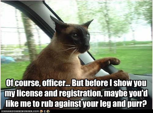 Of course, officer... But before I show you my license and registration, maybe you'd like me to rub against your leg and purr?