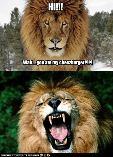cheezburger lions hi you eating Cats - 6859095296