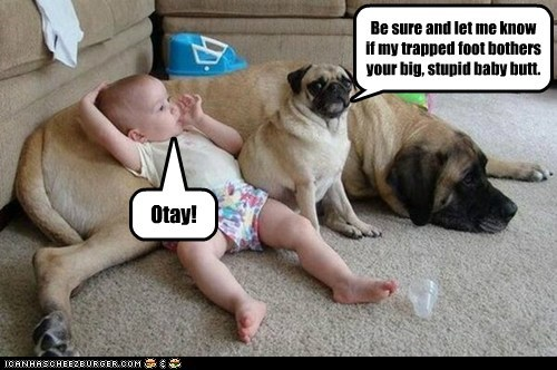 Babies,butt,dogs,pug,mastiff,foot,stupid