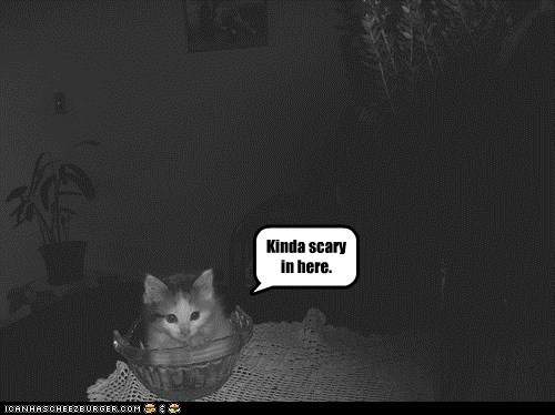 scary,spooky,captions,dark,Cats