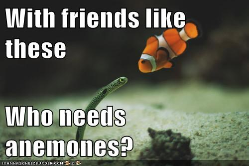 worms,enemies,friends,puns,anemones,fish