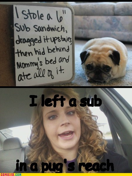 pug fault dog shaming sub derp - 6860593408