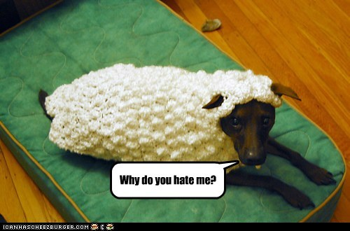 Why do you hate me?