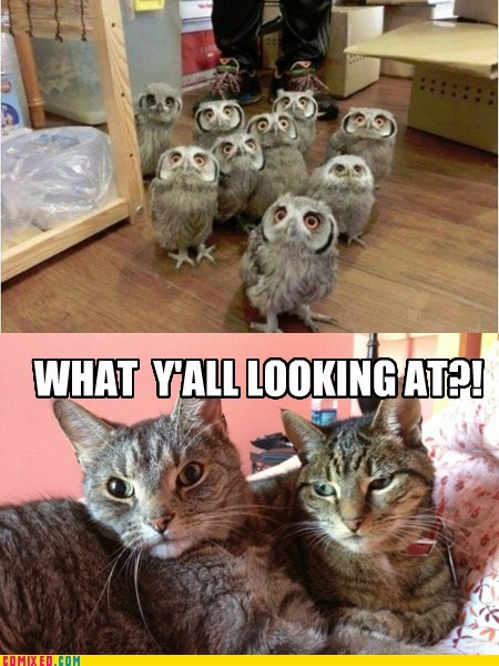 what you looking at Staring cute owls Cats - 6860852224