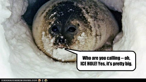 insulted,seals,misheard,hole,ice