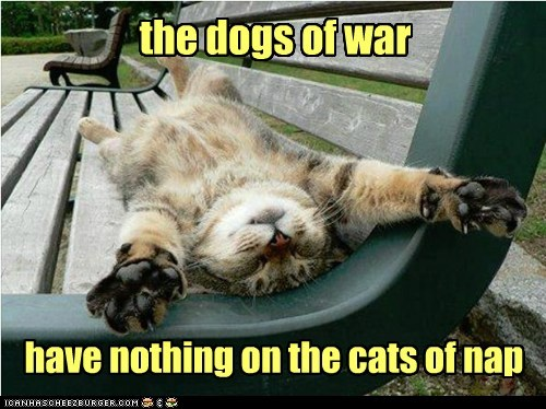the dogs of war have nothing on the cats of nap