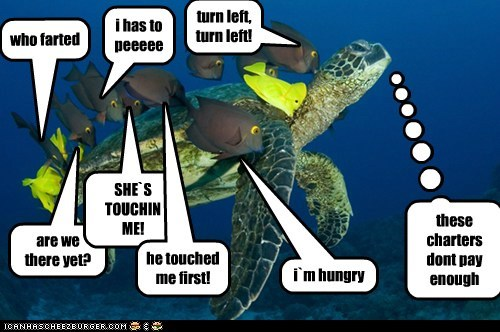 complaining school annoying kids turtles pay fish questions - 6861313792