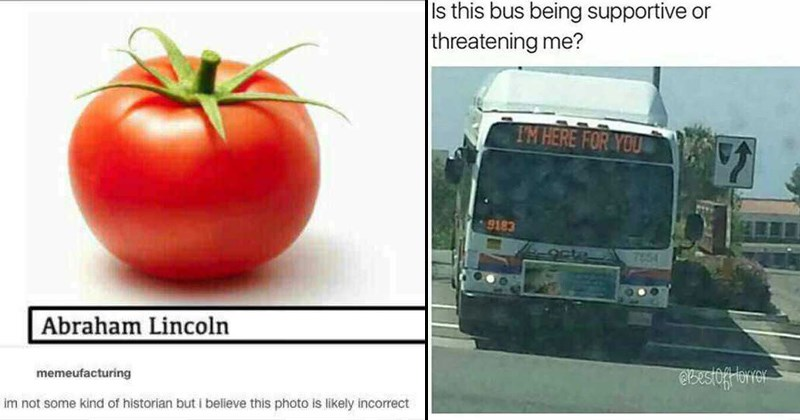 funny memes, threatening bus, tomato named lincoln