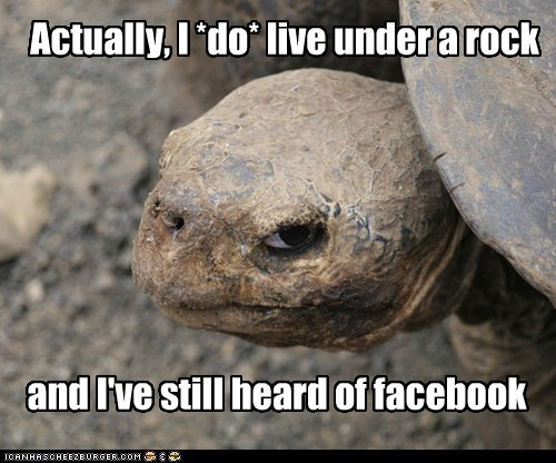 Actually, I *do* live under a rock and I've still heard of facebook