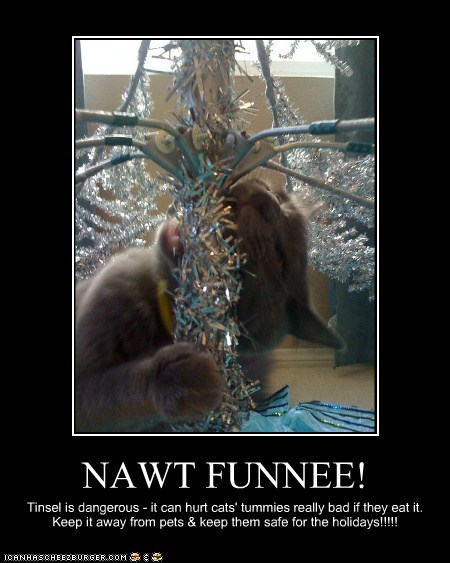 NAWT FUNNEE! Tinsel is dangerous - it can hurt cats' tummies really bad if they eat it. Keep it away from pets & keep them safe for the holidays!!!!!