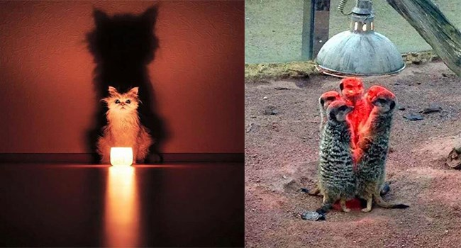 photos of animals that look like we may have caught them in the middle of some kind of satanic rituals
