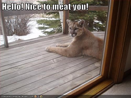 mountain lions cougars puns meet meat - 6863045888