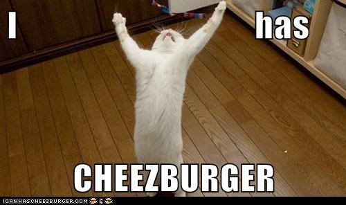 Cheezburger Image 6863273984