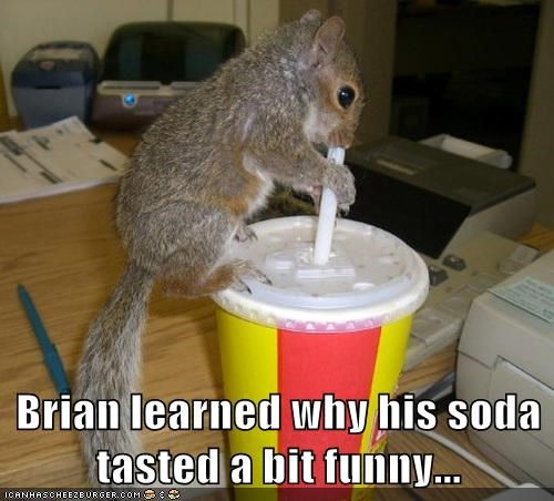 learned,drinking,soda,squirrels,straw,tastes funny