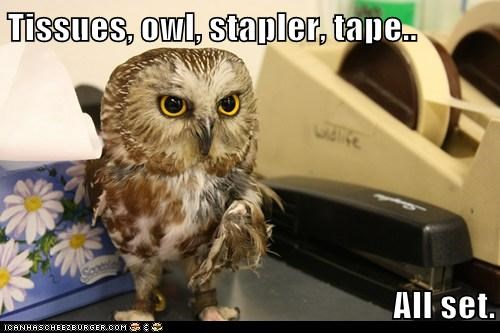 supplies,tissues,all set,owls,Office,tape
