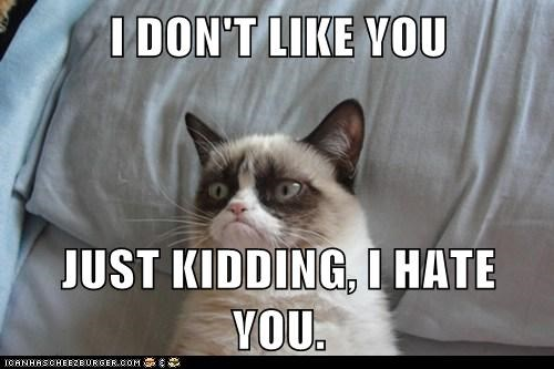 I Don T Like You Just Kidding I Hate You Lolcats Lol Cat