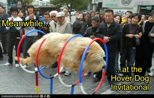 Meanwhile... ...at the Hover Dog Invitational