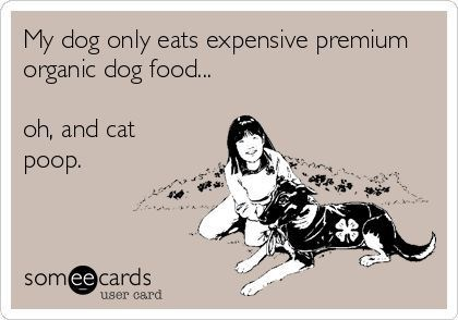 dogs ownership ecards funny - 6863877