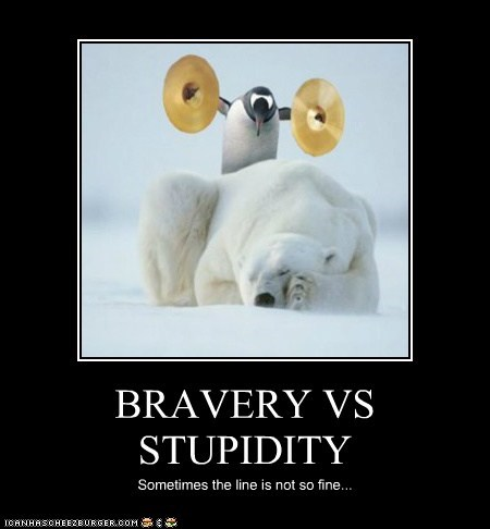 cymbals,penguins,bravery,polar bears,stupidity,waking up