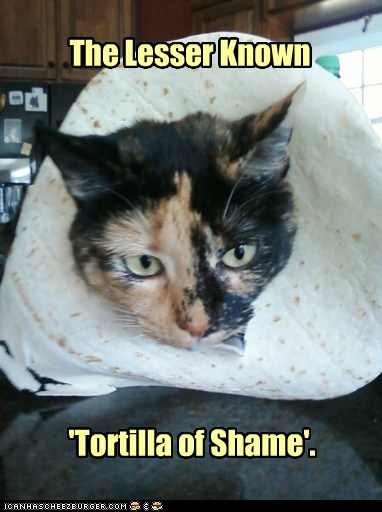 inbread tortilla captions shame bread Cats - 6864049920