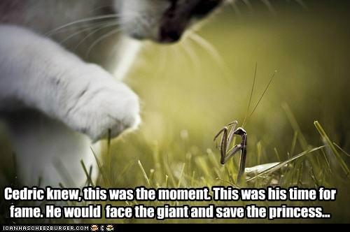 fame princess fantasy giant praying mantis story Cats - 6864091392