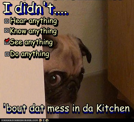 dogs pug it-wasnt-me i did not suspicious mess - 6864384512