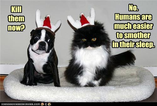 humiliation,dogs,smother,revenge,hats,costume,boston terrier,Cats