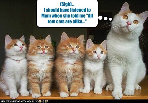 "(Sigh)... I should have listened to Mom when she told me ""All tom cats are alike..."""