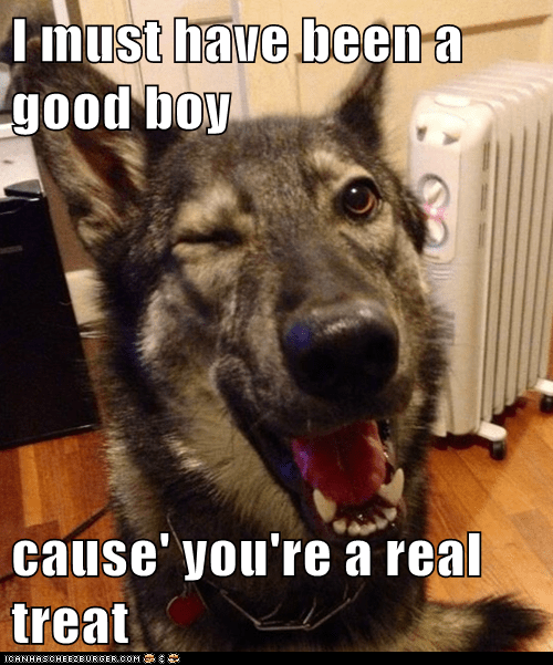 pickup lines treat pickup pup dogs treats flirting captions puns Memes - 6865615360