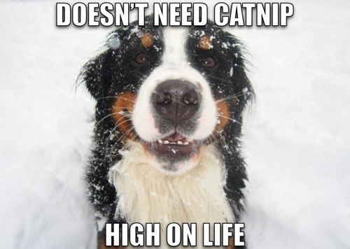 dogs high on life snow catnip happy what breed smile - 6865896448