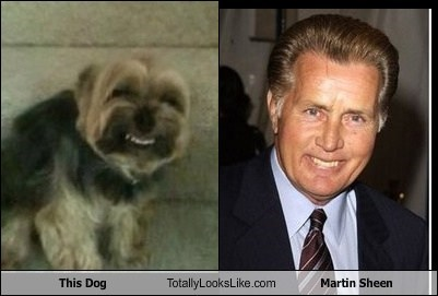 actor TLL martin sheen dogs funny animals