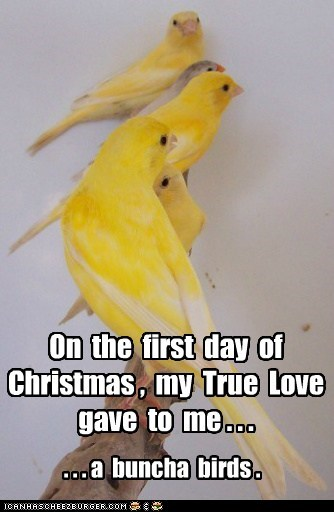 On the first day of Christmas , my True Love gave to me . . . . . . a buncha birds .