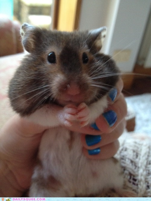 reader squee naughty pets hamster squee - 6866148096