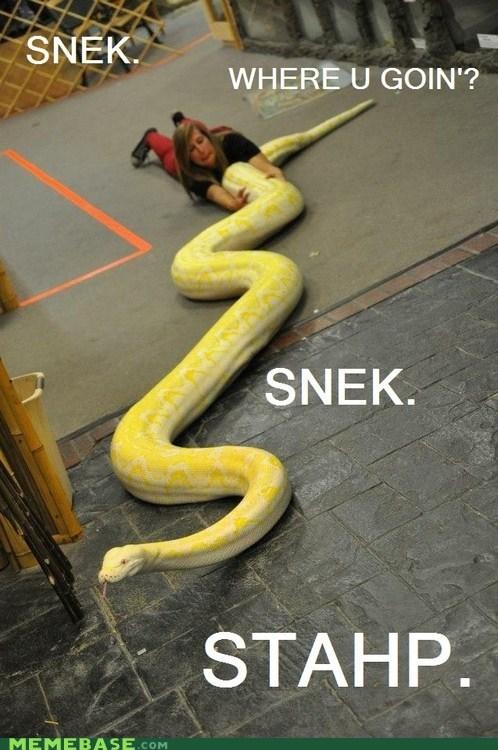 wtf stahp snake - 6866241792