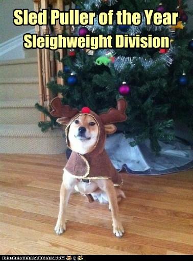 costume dogs reindeer christmas tree sled dog rudolf tree shiba inu - 6866247936