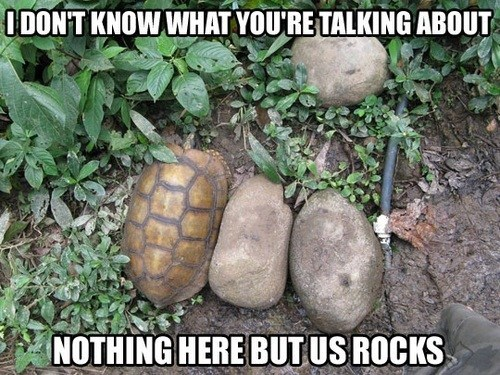 rocks disguise turtles hiding nobody here - 6866298880