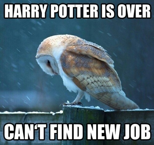 Sad,acting,Harry Potter,job,owls,unemployed