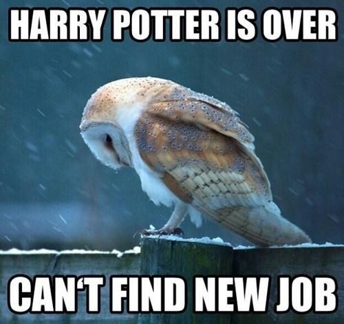 Sad acting Harry Potter job owls - 6866304256